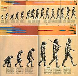 Grafik: Rudolph Zallinger; Quelle. Time-Life Books 1965